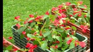 Proyecto busca llenar de flores áreas recuperadas de la capital