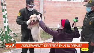 Adiestramiento de perros en alto obrajes