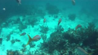 Exumas Land and Sea Park Coral Reef Snorkling