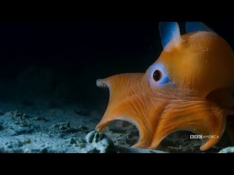 Gather Together and Go Deeper | Planet Earth: Blue Planet II | Saturday, January 20 at 9/8c