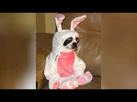 Best EASTER FAILS and FUNNY MOMENTS - You'll LAUGH all day long!