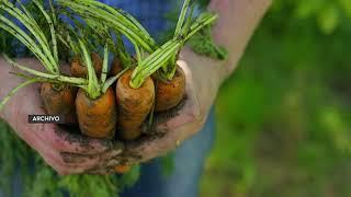 Analizan iniciativa de ley para dar equipo tecnológico a pequeños productores