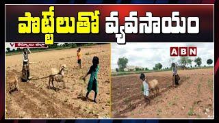 పొట్టేలుతో వ్యవసాయం  || Poor Farmer Agriculture With Potel || Kurnool District  || ABN Telugu - ABNTELUGUTV