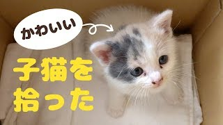 子猫 拾った『かわいい子猫を拾った。「ほ?てと」と名付けて一緒に暮らすことに!』などなど