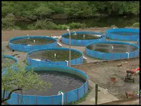 download youtube to mp3 como oxigenar el agua para tilapia