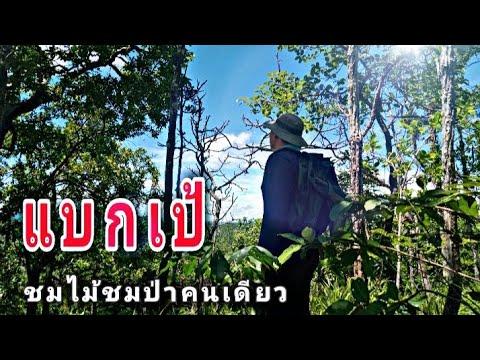 แบกเป้-เข้าป่าชมนกชมไม้เดินป่า