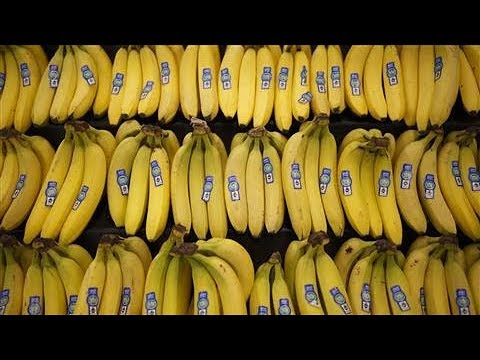 World's Top Banana Could Go Extinct