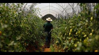 #InformeNacional | Gobierno de Guatemala promueve oportunidades laborales en el extranjero.