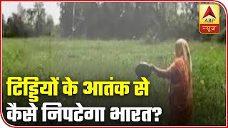 How can India counter the locust attack? | Discussion - ABPNEWSTV