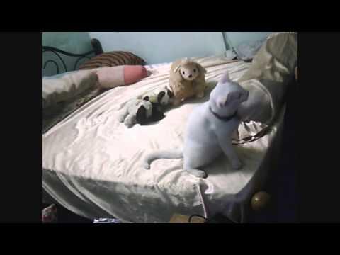 คลิปสอนแมว-กะทิ-(ซ้าย-ขวา)