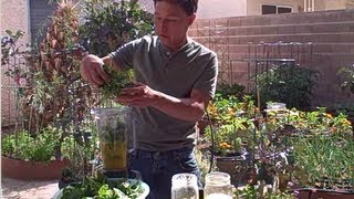 How to Make a Delicious Green Smoothie using Fresh Picked Spinach
