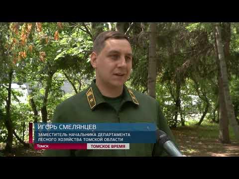 Сразу в трех районах области правоохранительные органы задержали черных лесорубов