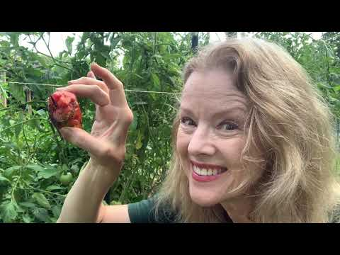What HAPPENED to my TOMATOES? | Part 5 // Late Bloomer