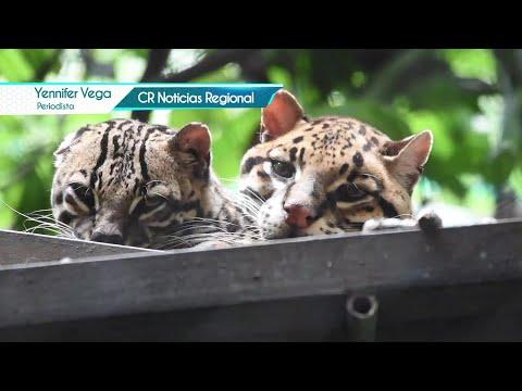 Costa Rica Noticias Regional - Jueves 09 Setiembre 2021