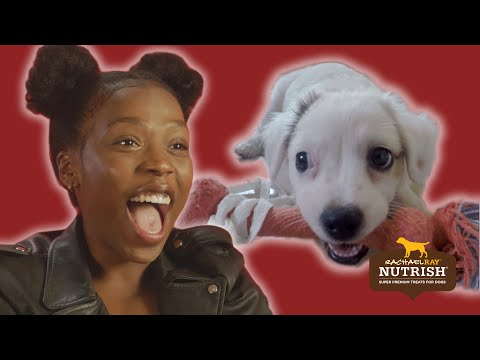 People With Commitment Issues Foster Dogs For A Week // Presented By BuzzFeed & Rachael Ray Nutrish