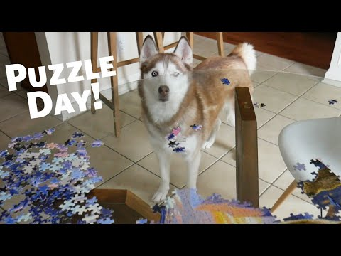 National Puzzle Day with Laika the Husky!
