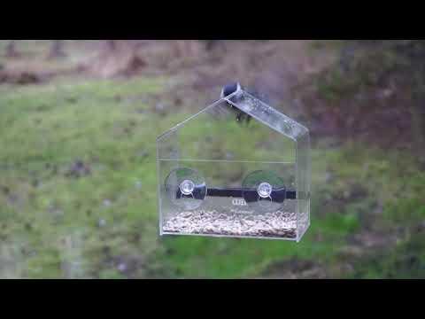 Liten fågelmatare för fönster – SmartaSaker.se