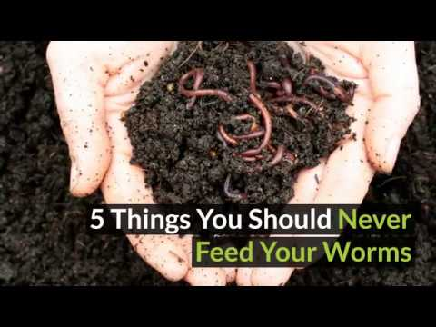 5 things you should never feed to your worm farm