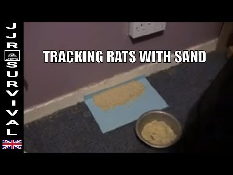 tracking rats with sand