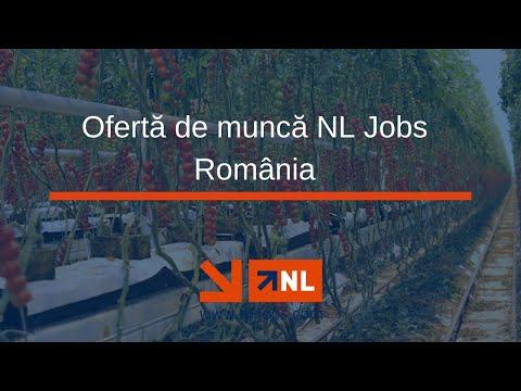 Prezentare ofertă de muncă NL Jobs România photo