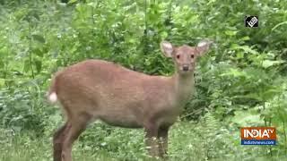 Pobitora Wildlife Sanctuary, Kaziranga National Park get affected by Assam floods - INDIATV