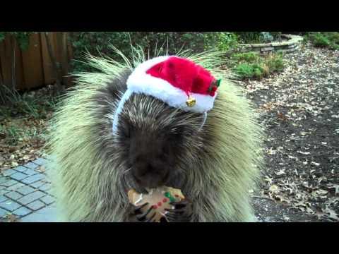 Gadający jeżozwierz życzy wesołych świąt!