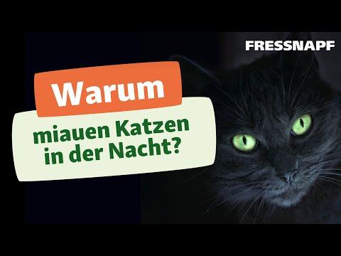 Warum miauen Katzen nachts?