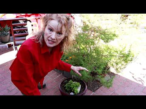 Front Yard Garden Tour - Stinging Nettle, Monarch Butterfly, Perennials! - Part2
