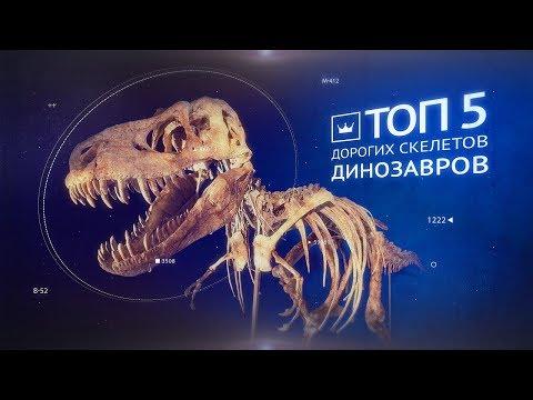 Самые дорогие скелеты динозавров. Аукцион Виолити 0+ photo