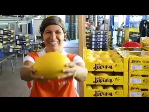 Región Chorotega estrena plataforma digital para compra de productos agropecuarios en línea