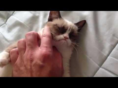 Bardzo naburmuszony kot