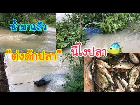 น้ำมาแล้ว-ตามพ่อไปยามต่งดักปลา