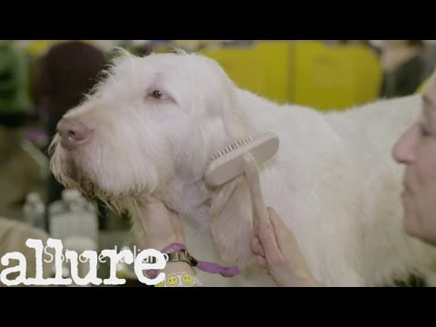 Dogs at the Westminster Dog Show Have a More Elaborate Getting Ready Routine Than We Do
