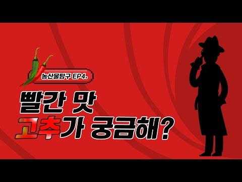 빨간 맛 고추가 궁금해! | 농산물 탐구생활 ep. 4