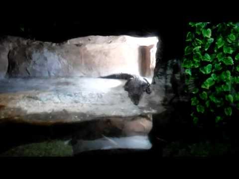 Aquarium Alligator