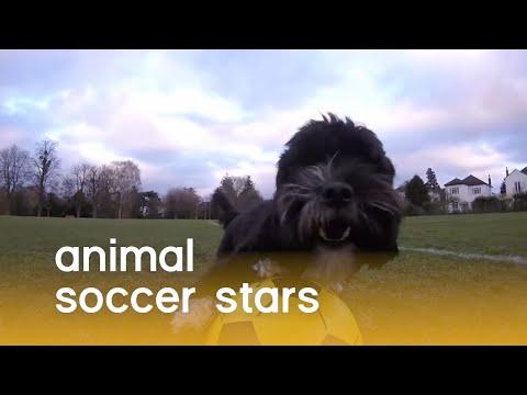 Soccer Stars of the Animal Kingdom