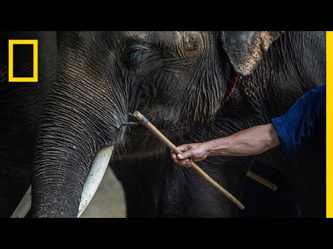 Inside the Dark World of Captive Wildlife Tourism | National Geographic