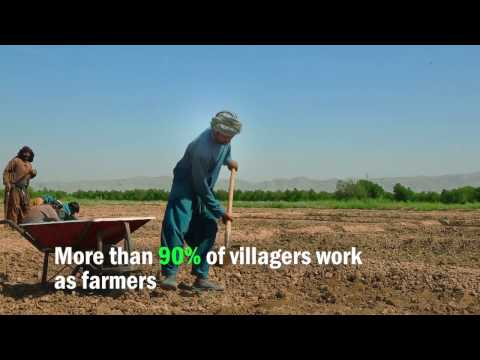 Supporting Agriculture Productivity in Rural Afghanistan