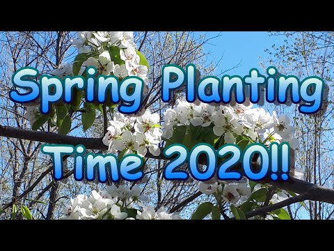 Garden Planting Time 2020