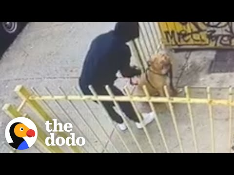 Hidden Camera Catches Guy Abandoning Pit Bull Outside A Store | The Dodo Pittie Nation