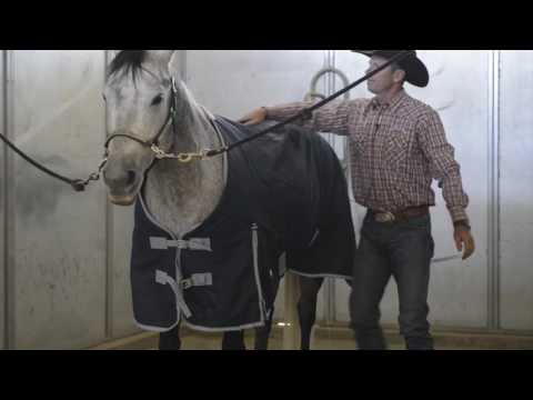 How to Put a Weaver Leather Turnout Blanket on a Horse