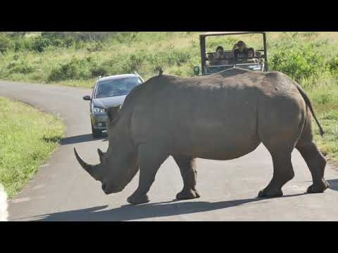 African Wildlife and Landscapes with Fred. Olsen - cruise D1926