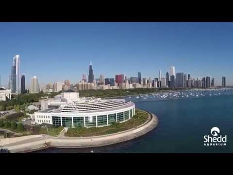 Science Pub: Bob Wengel on Shedd's Sustainability Roadmap