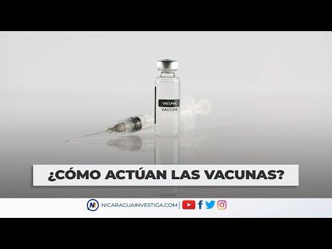 ¿Cómo actúan las vacunas - VIDEO EXPLICATIVO