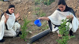 MP Navneet Kaur Accepts Green India Challenge |#Navneet Kaur   | TFPC - TFPC