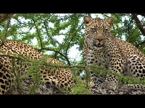 Serengeti National Park, Tanzania in 4K Ultra HD
