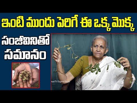 Medicinal Plants and Their Uses - Ayurvedic Plants || Dr Lakshmi || SumanTVHealthCare