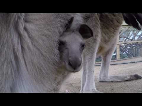 Australia Roadtrip - gustofrenzy