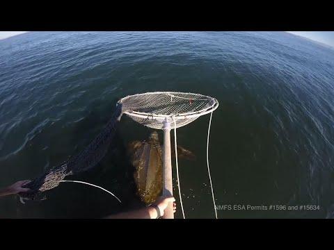 Sea turtles off US West Coast plummet