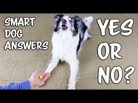 Smart dog answers